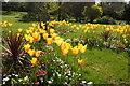 SX9265 : Tulips, Tessier Gardens by Derek Harper
