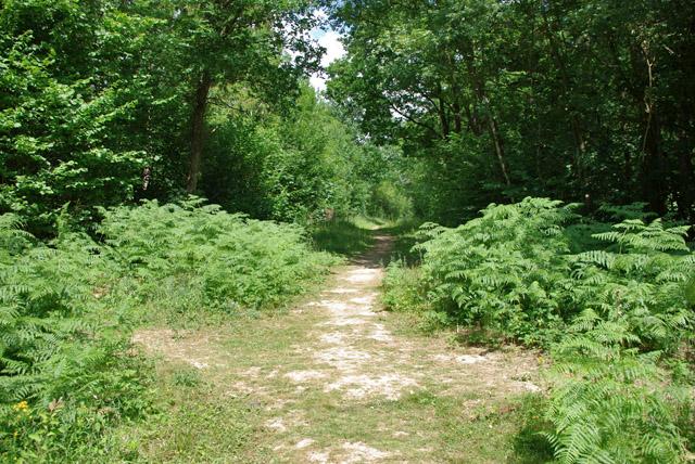 Paths in Highridge Wood