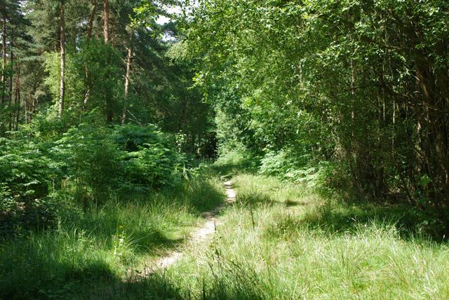 Path in Highridge Wood