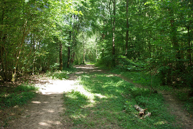 Bridleway in Highridge Wood