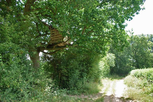 Tree platform near Strood Green