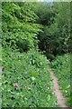 TQ5898 : Footpath to Church Wood by Glyn Baker