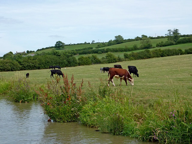 Canalside grazing west of Barby in Northamptonshire