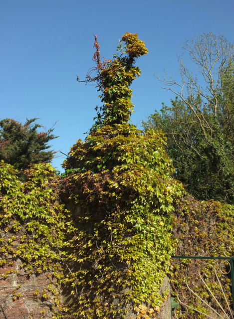 Creeper finial, Hollicombe