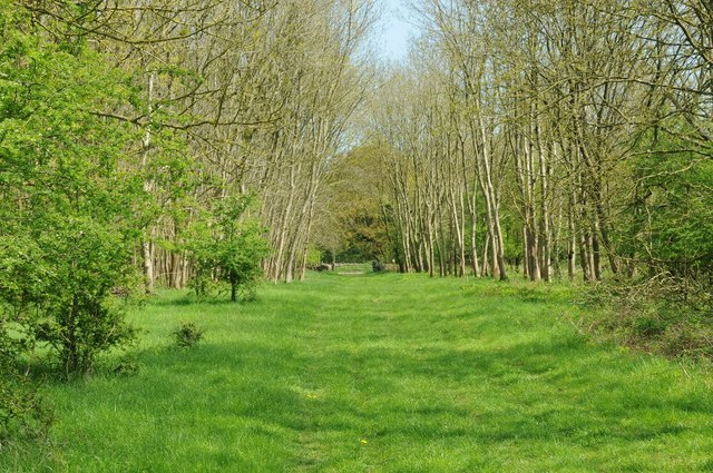 Track through Barnsley Wood