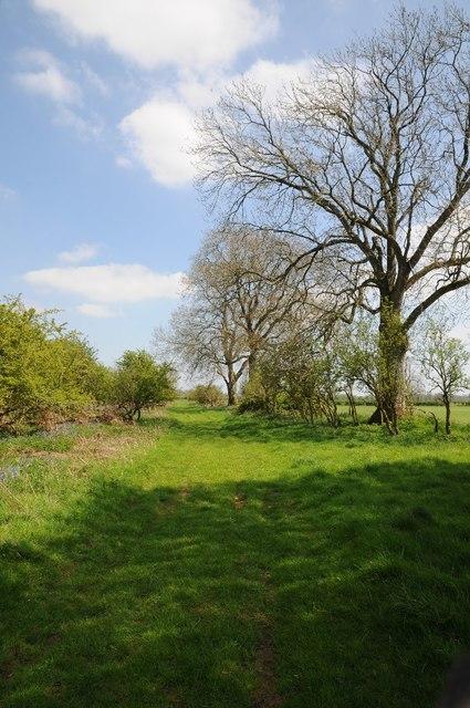 Track on the edge of Barnsley Wood