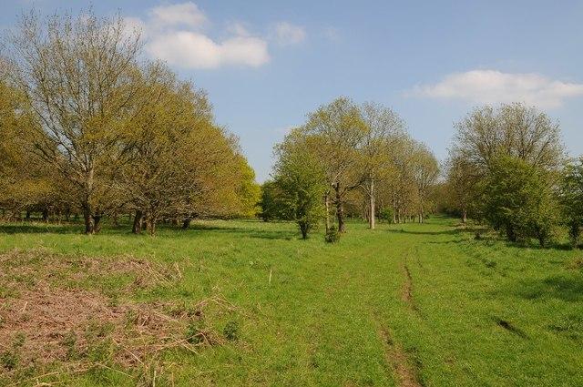 Barnsley Wood