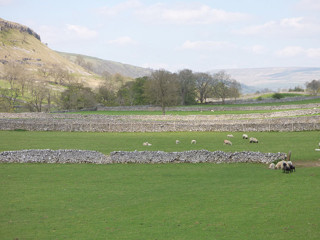 Sheep in Wharfedale below Kettlewell