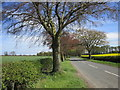 NZ0915 : The road to Whorlton near Sledwich by Jonathan Thacker