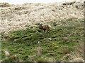 NR6792 : Deer on the Isle of Jura  by M J Richardson