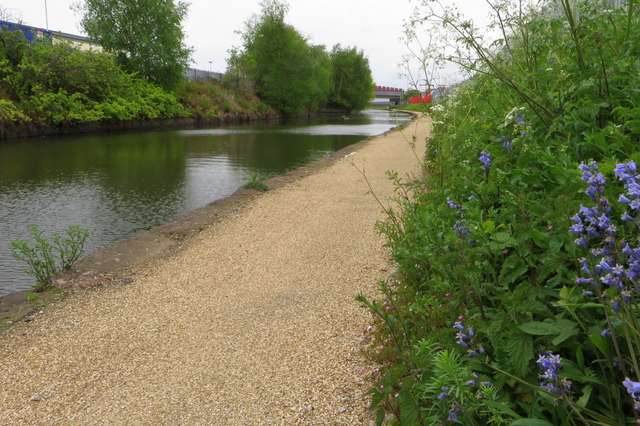 Bluebells by the Bridgewater Canal