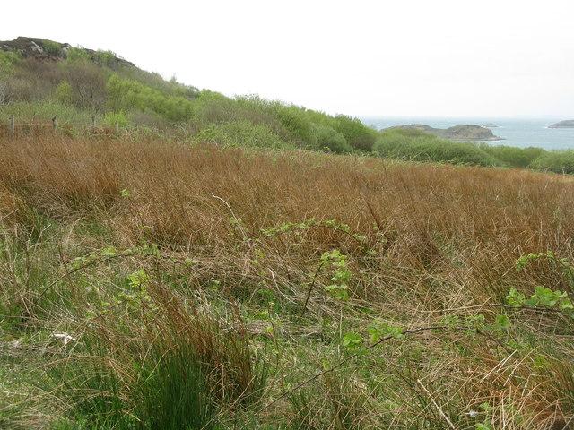 Coastal woodland at Ardfernal