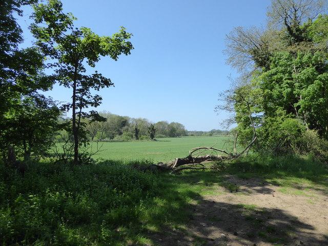 Field near Vale Farm