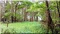 TL8269 : Ouze Plantation Near West Stow by Stuart Shepherd