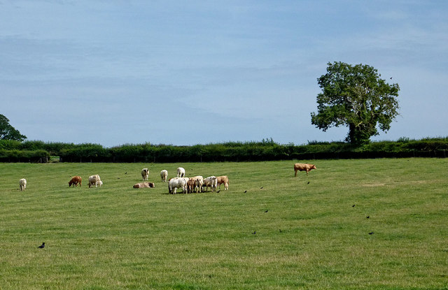 Pasture north-east of Willoughby in Warwickshire