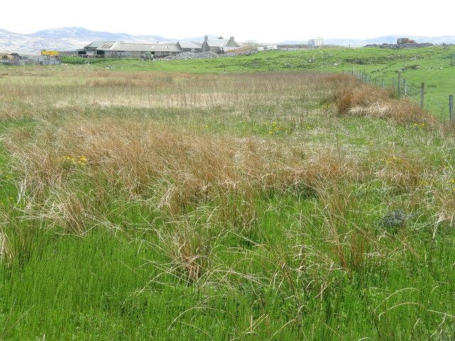Marsh and rough grazing at Ballimartin