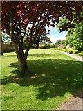 ST0107 : Cullompton: Walronds garden by Martin Bodman