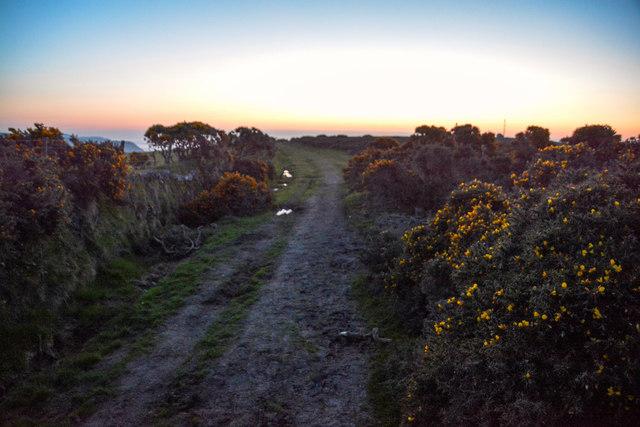 North Devon : Grassy Path