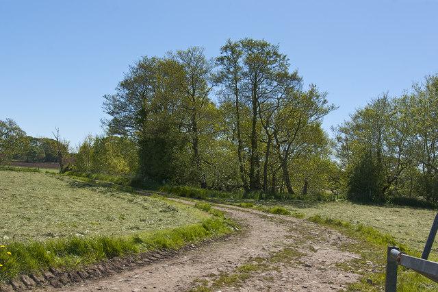 Track towards Snipe Wood