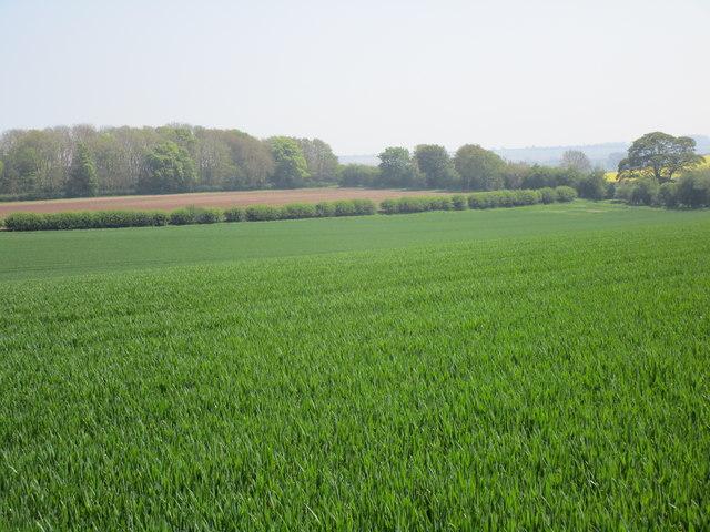 View towards Sheep Rake Lane