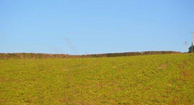 Field by Tamar Valley Line
