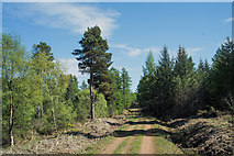 NH6761 : Forestry road in Millbuie Forest by Julian Paren