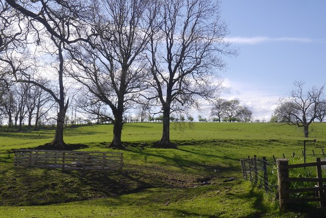 Pasture, Balfunning