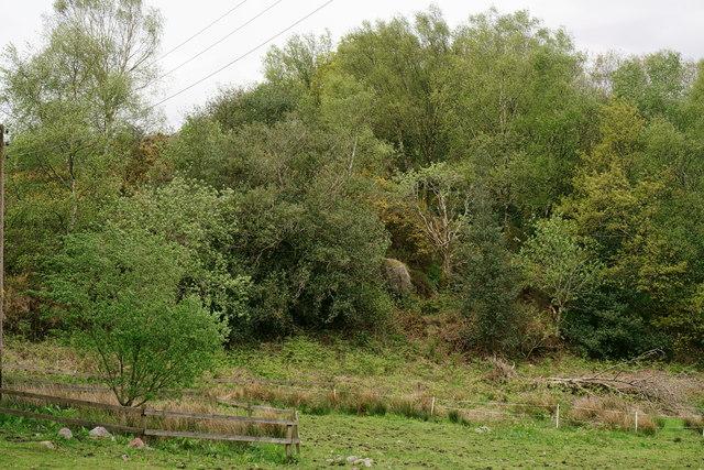 'Nature Wood'