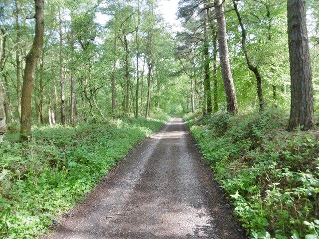 Oakamoor, woodland road