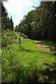 SY0099 : Ride, Ashclyst Forest by Derek Harper