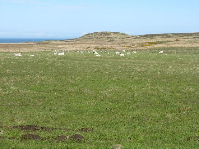 Sheep pasture at Ballymeanach