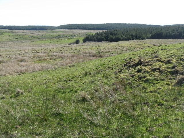Rough pasture and forestry