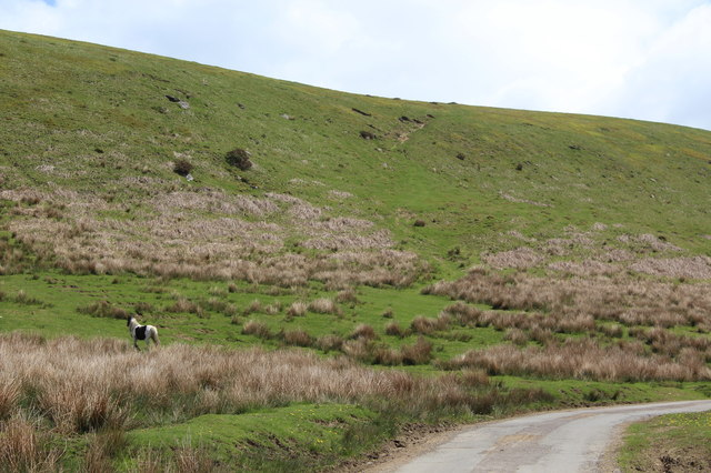 Hillside, Mynydd Meio Common