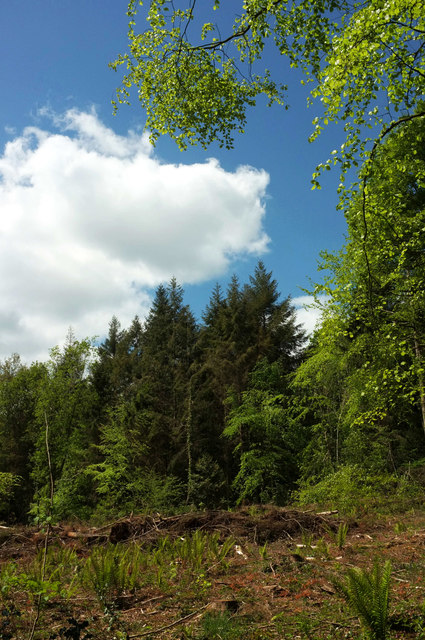 Clearing, Ashclyst Forest