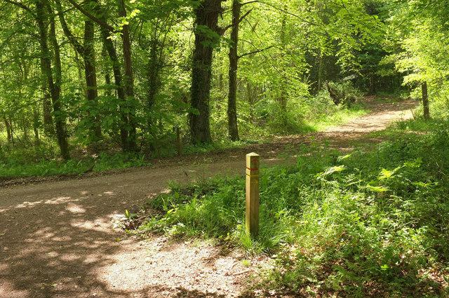 Track junction, Ashclyst Forest
