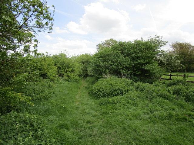 Footpath to Wymondham Drift