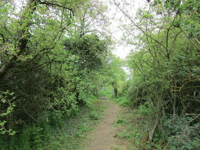 Bridleway to Wymondham