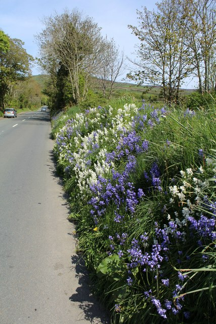 Roadside verge on A3