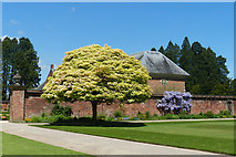 ST2885 : Acer brilliantissimum and wisteria, Tredegar House gardens, Newport by Robin Drayton