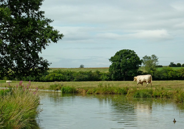 Canalside pasture east of Willoughby in Warwickshire