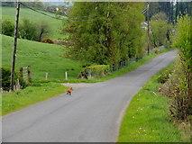 H5375 : Spring Road, Fernagh by Kenneth  Allen