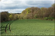 NZ1164 : Arable field beside the River Tyne by Graham Robson
