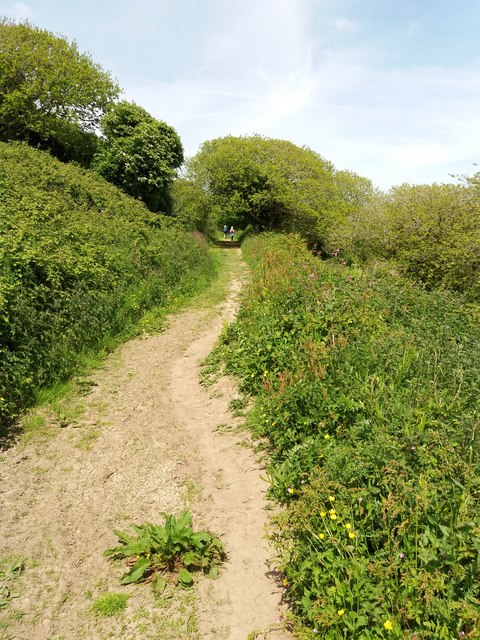 South West Coast Path above Centry Wood