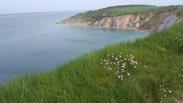 Clifftop Flowers and Alum Bay, Isle of Wight