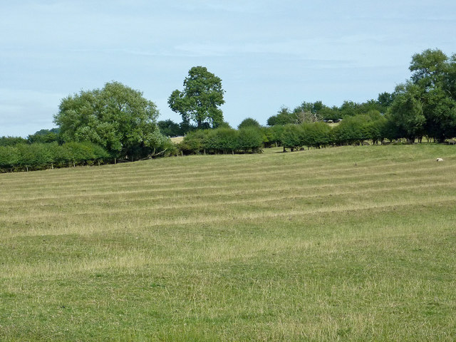Ridge and furrow pastures near Willoughby, Warwickshire