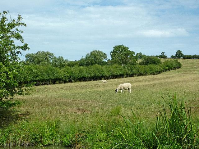 Northamptonshire pasture north-west of Braunston
