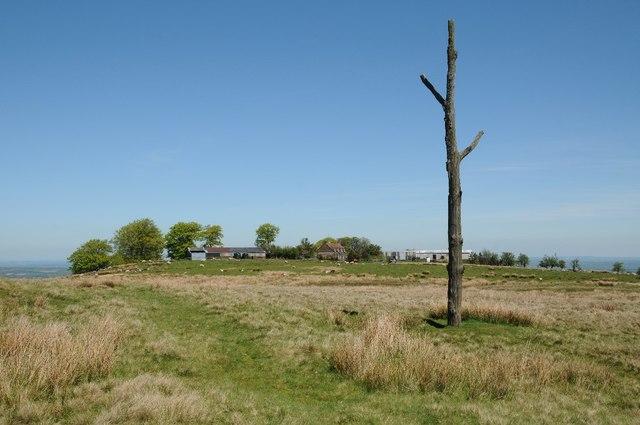 Three-Forked Pole and Random Farm