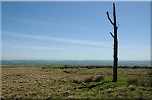 SO6077 : The Three-Forked Pole by Philip Halling