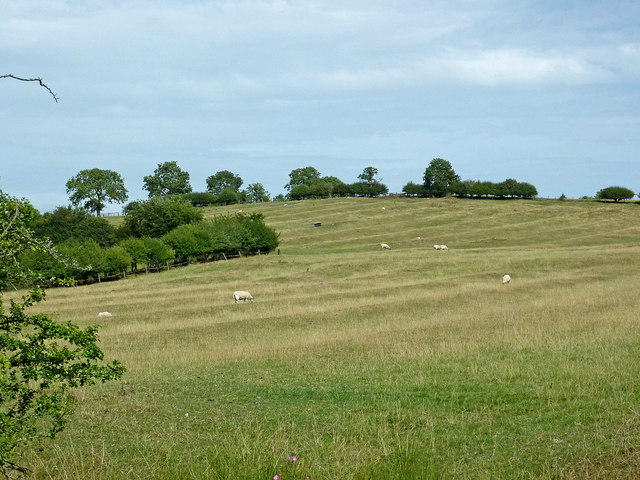 Ridge and furrow pastures near Braunston, Northamptonshire