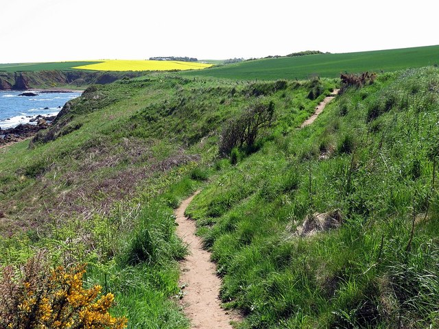 Berwickshire Coastal Path near Yellow Craig Head
